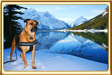 Ebbey the Canine Actor at a Mountain Lake